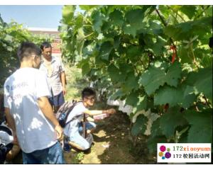 探索现代农业暑期社会实践调研活动总结